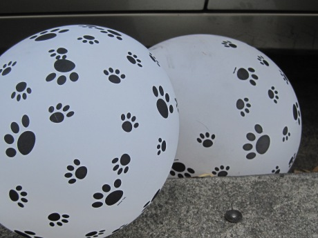 Wedged between parked car & pavement, a paw printed balloon got the point & click--enhanced version.  Enjoy!
